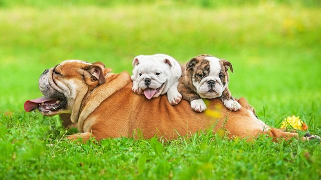 低脂肪ドッグフードをおすすめする犬