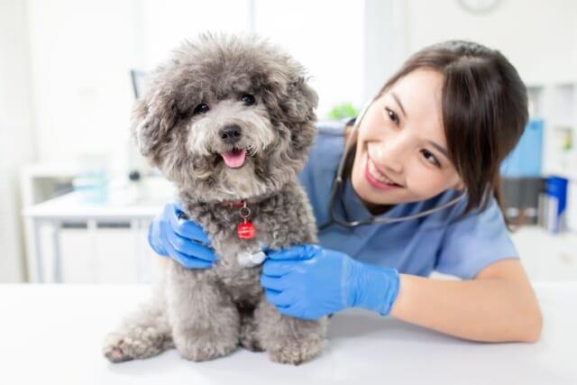 獣医師監修や評価のドッグフード