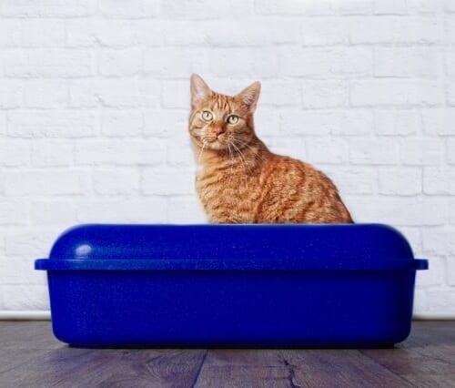【便秘の猫におすすめの餌】お通じ改善用キャットフードTOP5!