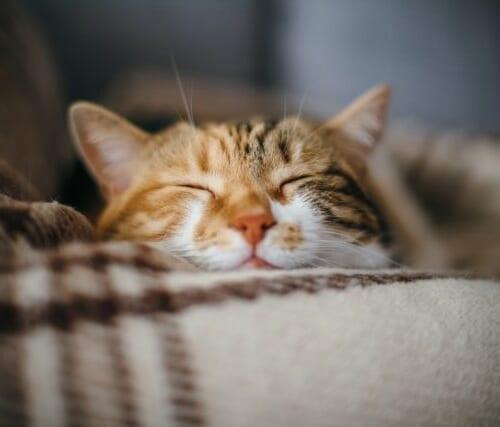 餌で免疫力アップ!猫の免疫力を高めるおすすめキャットフード5選
