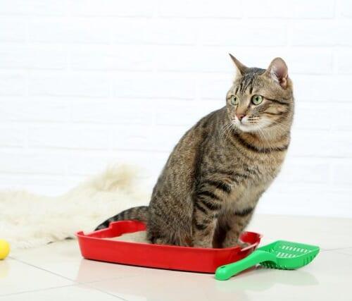 尿路結石の猫におすすめの餌!pHコントロール用キャットフード5選